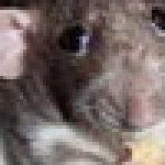Profilbild von usyzan